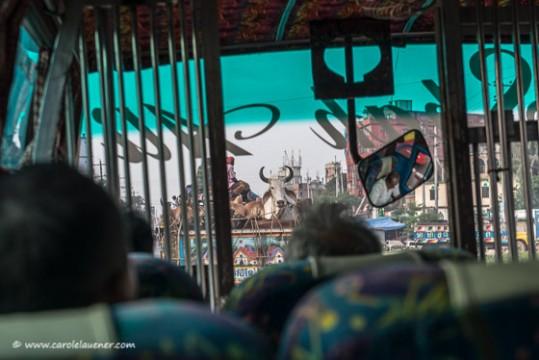 Während die Kühe fürs Eid Festival in die Stadt gebracht werden...
