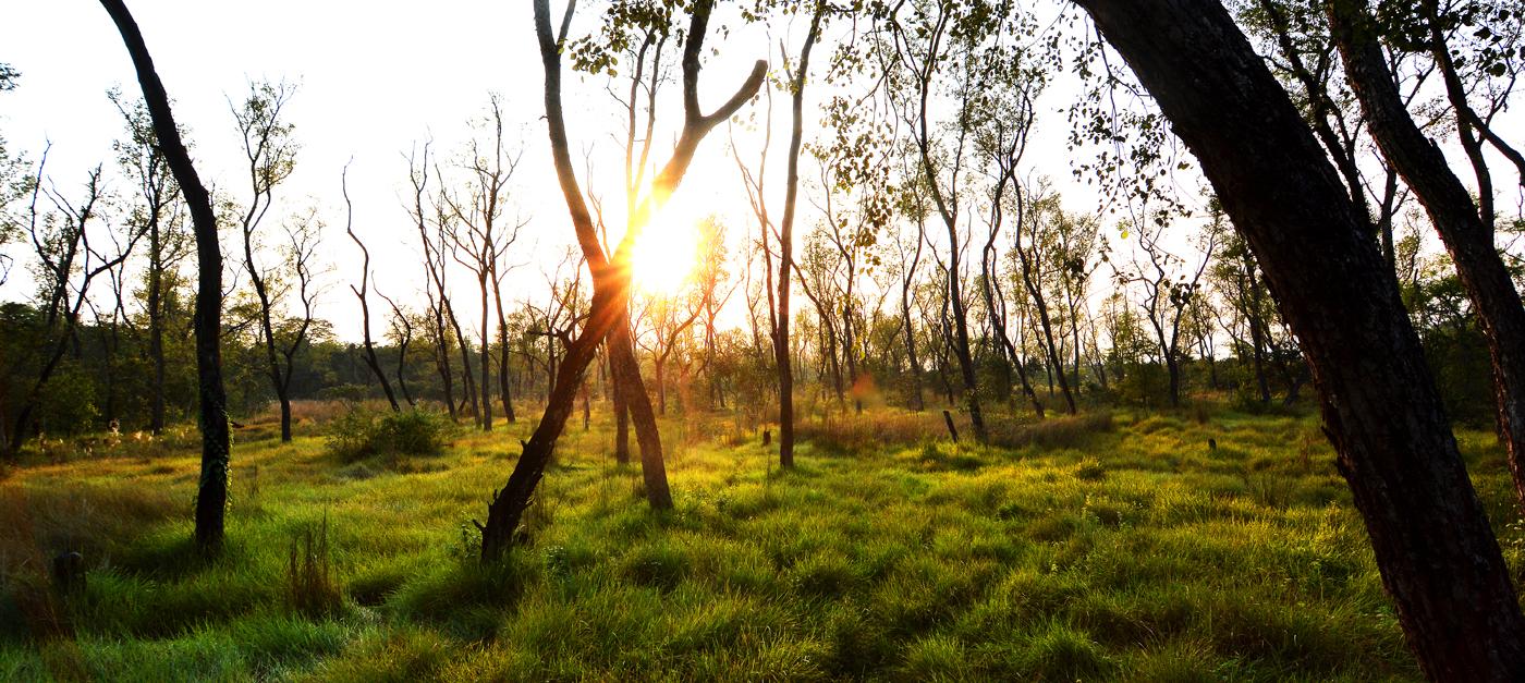 Sumpfwaldlandschaft im Chitwan Nationalpark.
