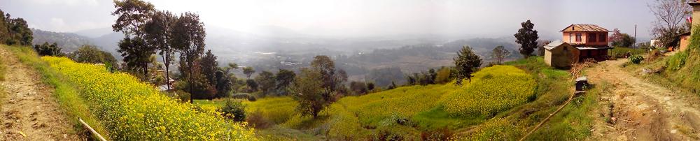 Rapsfelder im bäuerlichen Hinterland Kathmandus.