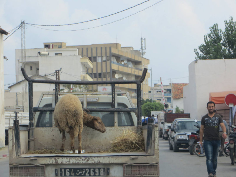 Environ 900'000 familles tunisiennes sacrifient des moutons pour la fête de l'Aid El-Idha chaque année.