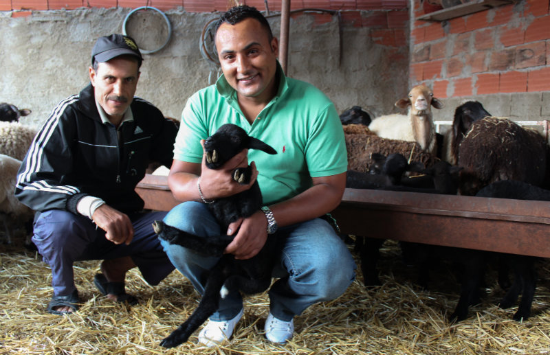 Walid Jebali, au premier plan, et son cousin au milieu de leurs moutons.