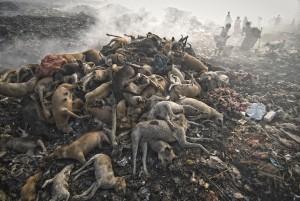 Kaung Htet Hunde