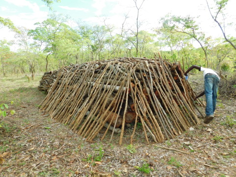 Basic earth kiln designed to produce charcoal.