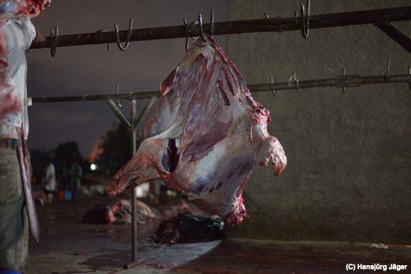 Das Corpus Delicti - ein Vorderviertel eines Rindes, bereit für die Fleischinspektion...