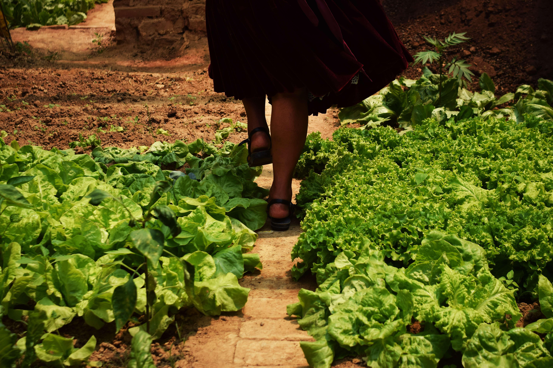 Gemüsegarten, Füsse und Beine einer Frau von hinten